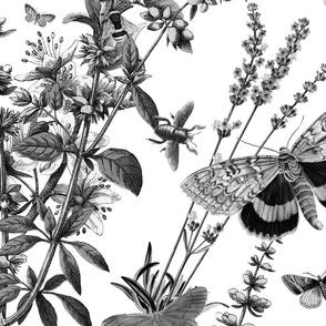 Butterflies bats and flora