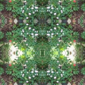 Flower-studded Garden Paths (Ref. 0384)