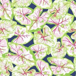 Caladium - Pink Green Navy