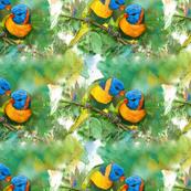 african-parrots
