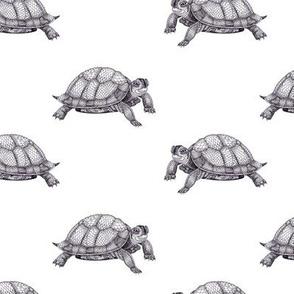 black & white turtles