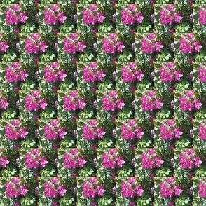 Hot Pink Bouganvillea Lattice (Ref. 1825b)