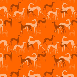 sighthoounds orange