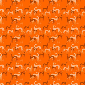 sighthounds orange small