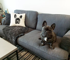 Pillowcover_frenchie_150_comment_600770_preview