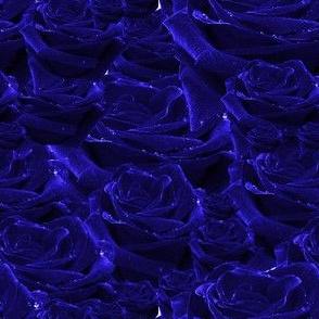 love roses- blue