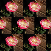 Double the Delight of Rose Blooms on Chocolate Bricks (Ref. 0845)