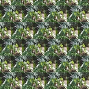 A Lattice of Leafy Lovelies (Ref. 1178)s and Crosses