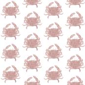 Pink_crab_LR