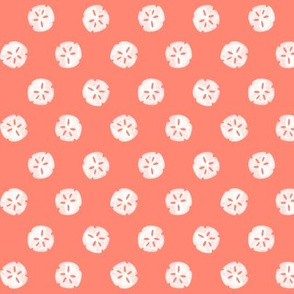 sandollars - Coral