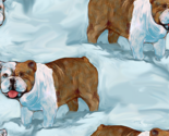 Rbulldog_in_snow_rev_thumb