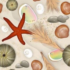 Mediterranean Shells