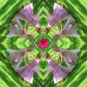Fairy Flower Kaleidoscope