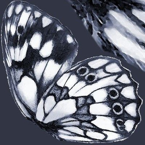 Marbled white (Melanargia galathea) butterfly wings