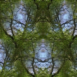 spring_green_leafs_the_old_maple_tree