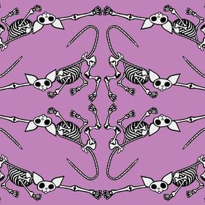 SphynxieBonez Reaching Flipped in Lavender