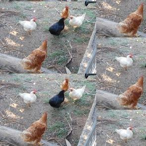 Debating the Pecking Order (Ref. 0015)