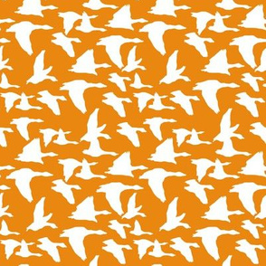 birds in flight orange