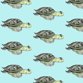 Sea Turtle - Blue Background