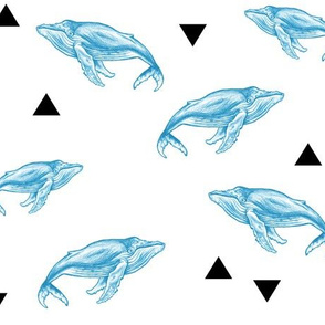 Blue Whales and Triangles