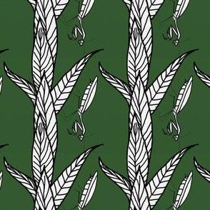 Black And White Praying Mantis on Green Backgound