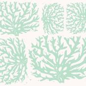 coral sea foam
