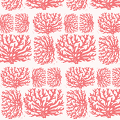 coral salmon pink