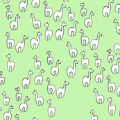 Llamas in the field