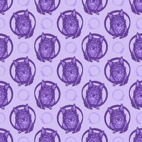 Collared Swedish Vallhund portraits - purple