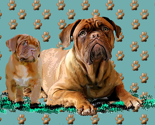 Rdogue_de_bordeaux_mother_and_pup_thumb
