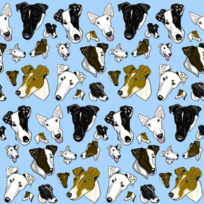 Smooth Fox Terriers-light blue