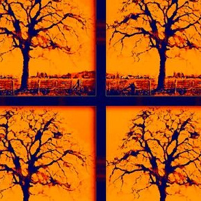 Garry Oak Tree  - orange