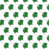 leaf - green