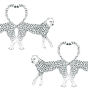 cheetah_minky