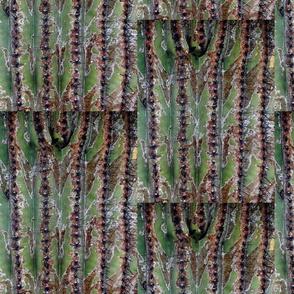 Cactus Thorns 1