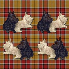 Bertie and Willie Scottie Stripe