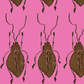 Pink & Brown Bug