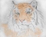 Rcustom_size_tiger__tinted_thumb