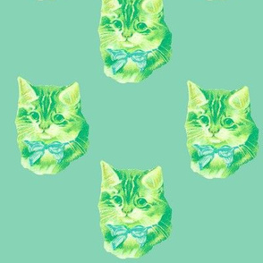Kitten Dot in greenish