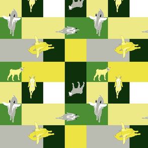 Goats and squares
