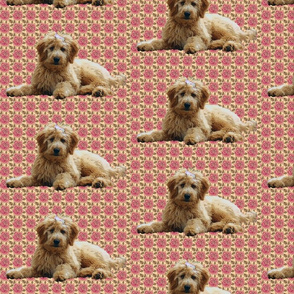goldendoodle_and_roses