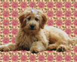 Rgoldendoodle_and_roses_thumb