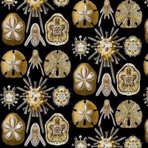 Ernst Haeckel Echinidea Fabric