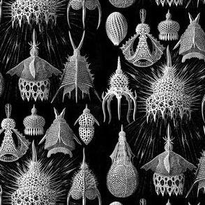 Ernst Haeckel Fabric Cyrtoidea