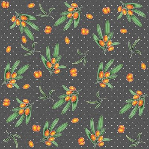 Hippophae on grey
