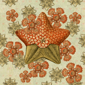 starfish_garden