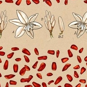 Botanica Proserpina