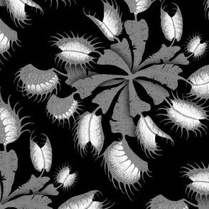 Venus Fly Trap - monochrome