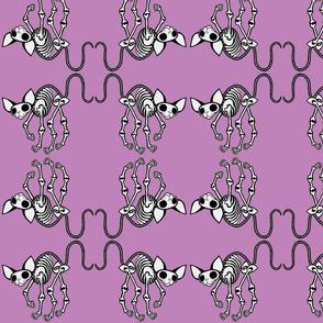 Curled Toes SphynxieBonez Flipped in Lavender