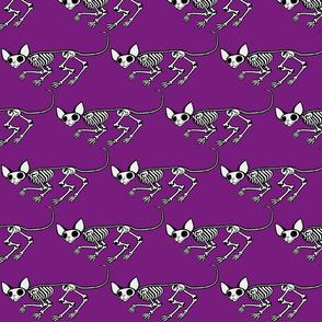 Triangular Skulking SphynxieBonez in Purple